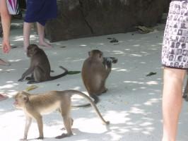 Affen Phuket Thailand